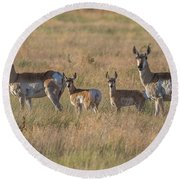 Pronghorn Fawns And Their Mothers Round Beach Towel