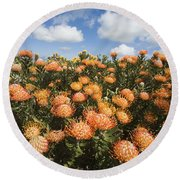 Protea Blossoms Round Beach Towel