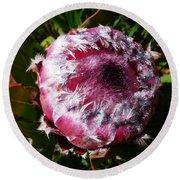 Protea Flower 1 Round Beach Towel