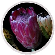 Proteas Round Beach Towel