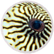 Pufferfish Round Beach Towel