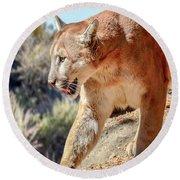Puma Mountain Lion Nature Wear Round Beach Towel