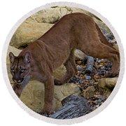 Puma Stalking Round Beach Towel