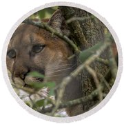 Puma Stalking Round Beach Towel