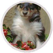 Pup In The Flowers Round Beach Towel