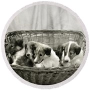 Puppies Of The Past Round Beach Towel