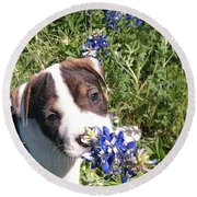 Puppy In The Blubonnets Round Beach Towel