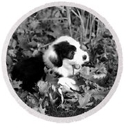 Puppy In The Leaves Round Beach Towel