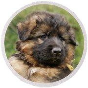 Puppy Portrait II Round Beach Towel by Sandy Keeton