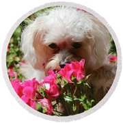 Puppy With Roses Round Beach Towel
