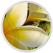 Pure Beauty Plumeria Flowers Round Beach Towel