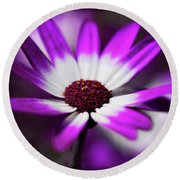Purple And White Daisy  Round Beach Towel