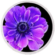 Purple Anemone Flower Round Beach Towel
