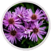 Purple Aster Blooms Round Beach Towel