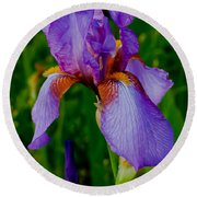 Purple Bearded Iris Portrait Round Beach Towel