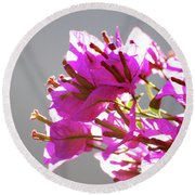 Purple Bougainvillea Flower Round Beach Towel