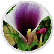Purple - Calla Lily - Bloom Round Beach Towel