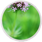Purple Crosswort Flower Round Beach Towel