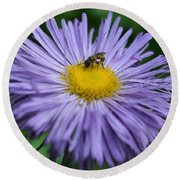Purple Daisy And Guest Round Beach Towel