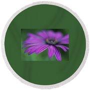 Purple Daisy Round Beach Towel