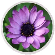 Purple Daisy Square Round Beach Towel