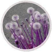 Purple Dandelions Round Beach Towel