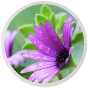 Purple Flower Closeup Round Beach Towel
