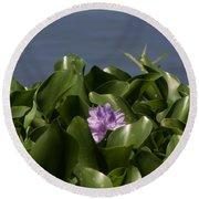 Purple Flower On Bayou Round Beach Towel