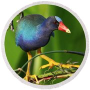 Purple Gallinule Round Beach Towel