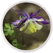 Purple Harlequin Columbine Round Beach Towel