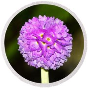 Purple Himalayan Primrose Round Beach Towel