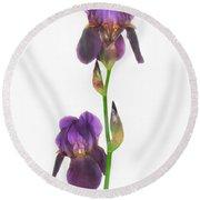 Purple Iris Duet Round Beach Towel