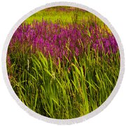 Purple Loosetrife And Cat-tails Round Beach Towel