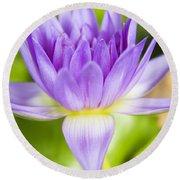 Purple Lotus Blossom Round Beach Towel