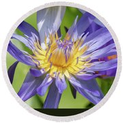 Tropical Purple Water Lily Round Beach Towel