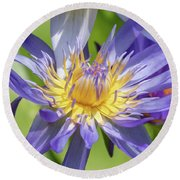 Purple Water Lily Flowers Blooming In Pond Round Beach Towel
