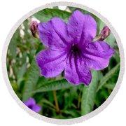 Purple Mexican Petunia Round Beach Towel