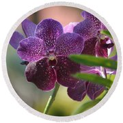 Purple Orchid Beauty Round Beach Towel