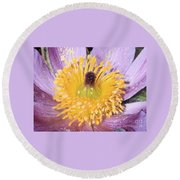 Purple Pasque Flower With Pollen Round Beach Towel
