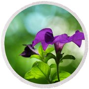 Purple Petunia On A Cool Spring Day Round Beach Towel