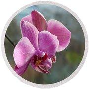 Purple Phalaenopsis Orchid Round Beach Towel