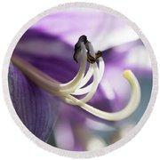 Purple Pollenate Round Beach Towel