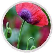 Purple Poppy Flower Round Beach Towel