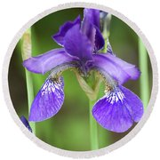 Purple Siberian Iris Round Beach Towel