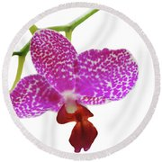 Purple Spotted Orchid On White Round Beach Towel