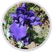 Purple Springtime Iris  Round Beach Towel