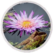 Purple Star Water Lily Round Beach Towel