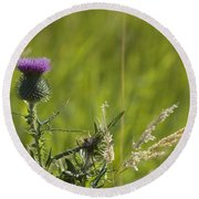 Purple Thistle Round Beach Towel
