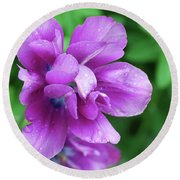 Purple Tulip Blossom With Dew Drops On The Petals Round Beach Towel