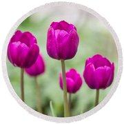 Purple Tulips 1 Round Beach Towel